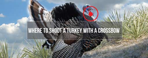how to shoot a turkey